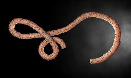 virus organism: Ebola virus, bacteria, virus , epidemic. Realistic 3d render virus Ebola with blood cell inside organism.