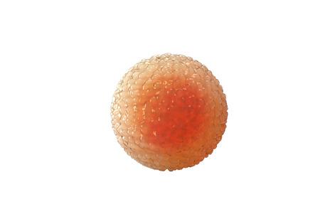 animal sex: Spermatozoons sperms cell egg 3d render. Stock Photo