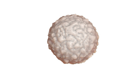 organelles: Medical anatomy Illustration . White blood cell
