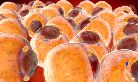 liposuction: Fat Cells from adipose tissue. adipocytes. 3d render Stock Photo