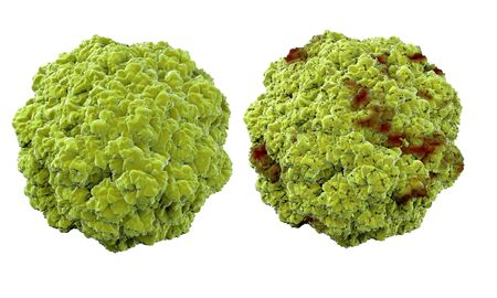 virus bacteria: Virus, bacteria, microbe medical anatomy concept  isolate
