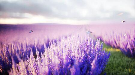 Papillons dans le champ de lavande. concept de la nature. Rendu 3D Banque d'images - 88502227