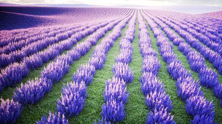 Papillons dans le champ de lavande. concept de la nature. Rendu 3D Banque d'images - 88502229