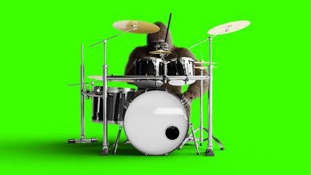 Funny brown gorilla play the drum. Super realistic fur and hair. Green screen. 3d rendering. Foto de archivo