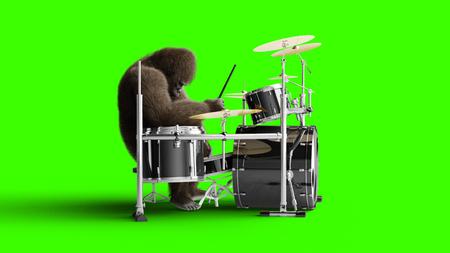 Gorila marrón divertido tocar el tambor. Pelaje y cabello súper realistas. Pantalla verde. Representación 3D. Foto de archivo