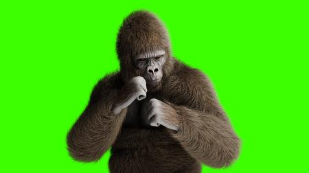 Lucha divertida del gorila marrón. Pelaje y cabello súper realistas. Pantalla verde. Representación 3D.