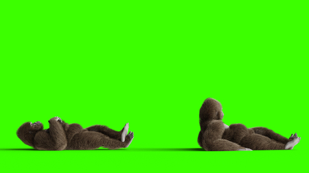 Funny brown gorilla idle. Super realistic fur and hair. Green screen. 3d rendering. Standard-Bild - 110566853