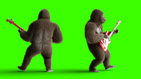 Funny brown gorilla play the bass guitar. Super realistic fur and hair. Green screen. 3d rendering.