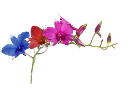 Colorful orchid photo