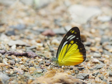Butterfly on the ground Blurred view of natural background Stock Photo