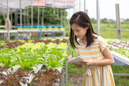 Asian cute girl is learning to grow hydroponics vegetables in the farm