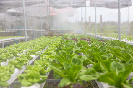 Hydroponics Vegetables Farm