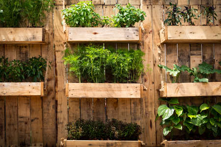 Grow vegetables in limited areas,vegetable gardening ideas. Archivio Fotografico