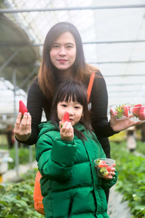 Asian tourists,mother and daughter are happy with strawberry tasting fresh in strawberry farm,Travel to Korea