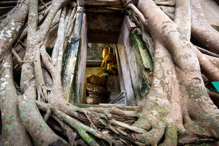 Old golden buddha statue in church,ancient temple of Wat Bang Kung,outside is covered with large tree roots,banyan tree,travel in Amphawa,landmark of Samut Songkram near Bangkok,Thailand
