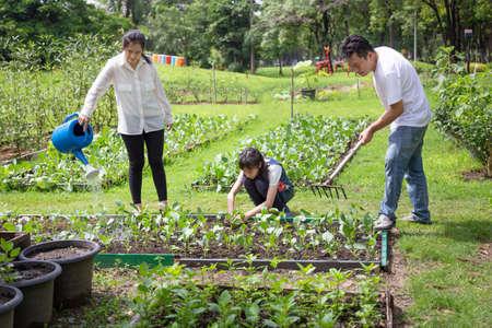 Heureuse famille asiatique,aide des parents,soins,fille pour faire pousser des légumes à la ferme,père travaillant à l'aide d'un râteau dans un jardin biologique,mère arrosant des plantes avec un arrosoir,jardinage de légumes,agriculture,concept d'activités