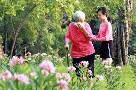 Asian senior grandmother sneezes in handkerchief due to pollen allergies,woman allergy to blooming flowers runny nose on tissue paper,elderly people have allergic to pollen blowing nose in the garden Standard-Bild - 134653514