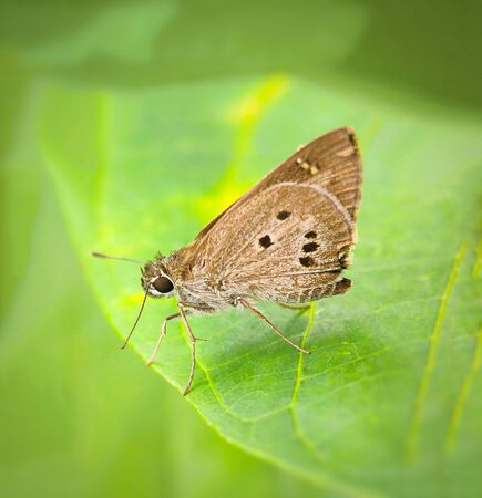 Beautiful brown butterfly alight on green leaves. A Pretty butterfly in the morning