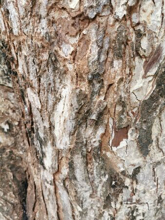 Dry tree bark texture for background and wallpaper. Texture of wood in close up