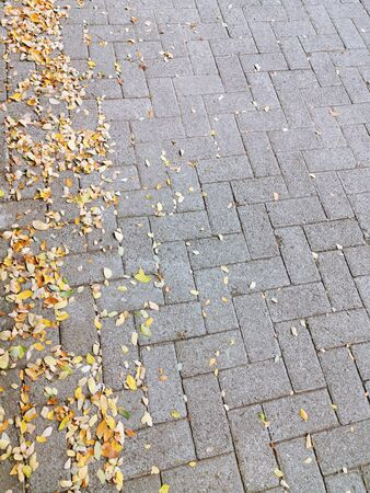 dried leaves fall on the paving block