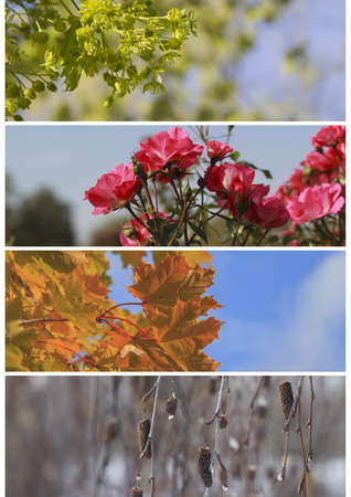 fall winter: A collage of plants in different seasons of the year: spring, summer, fall, winter Stock Photo