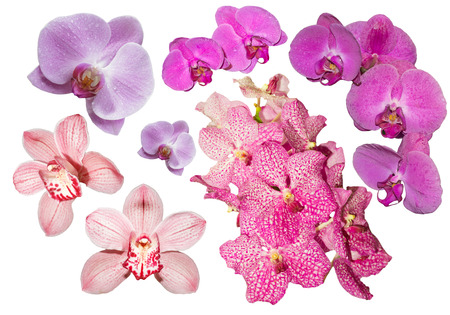 fuchsia color: Collection of pink, lilac and fuchsia color orchids isolated Stock Photo