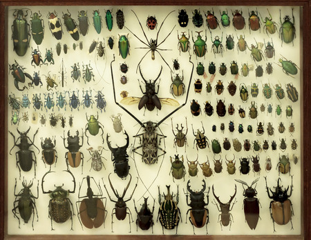 Collection of beetles under a glass.