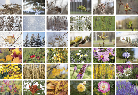 episodes: Four Seasons collage. Episodes natural conditions in different seasons: fall, winter, spring and summer weather. The geographical concept of the life cycle.