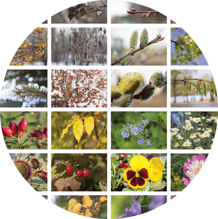 episodes: Four seasons collage. Episodes of natural conditions in different seasons, fall, winter, spring and summer. The concept of geographic plant natural cycle.