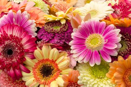 Background of multicolored bright gerberas, horizontal Imagens - 124884276