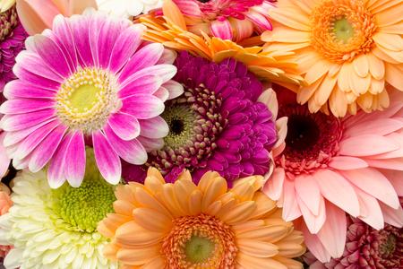 Background of multicolored bright gerberas, horizontal Imagens - 124884279