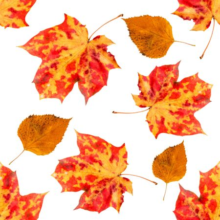 Seamless pattern with autumn leaves. Background of maple orange leaves.