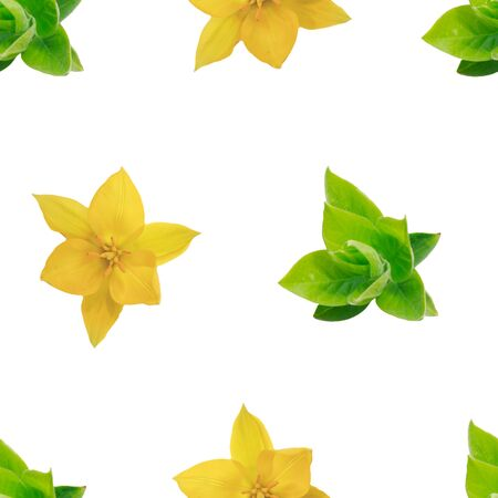 Spring seamless background with young leaves and flowers on a white background