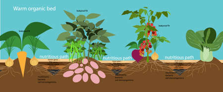organic farming. warm organic bed.Vector flat illustration.infographics.