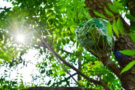 Ant's nest on tree Stock Photo