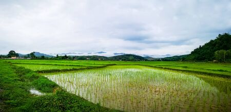 The most beautiful and amazing rice fields in Thailand