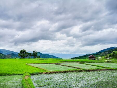 Beautiful Rice fields of green with mountain and fluffy clouds sky background