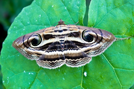 new born of butterfly living on a leaf Stock Photo - 12183398