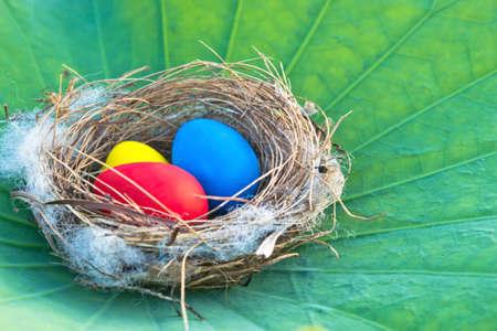 Easter eggs nest on lotus leaf photo