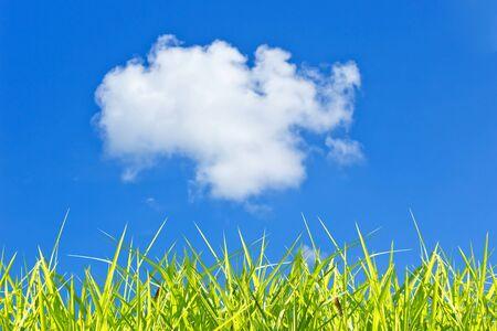 Grass and sky background Stock Photo - 13423402