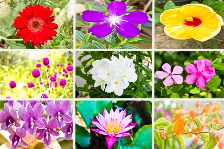 Collage of Varieties Flower of Thailand photo