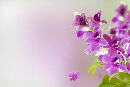 Orchid Flower Background photo