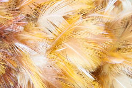 opalesce: Orange Feathers