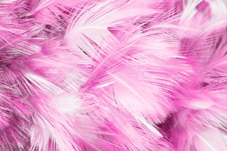 opalesce: Pink Feathers Stock Photo