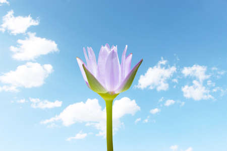 Lotus Flower With Blue Sky photo