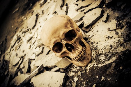 demonic: Human skull on ruins place,Horror Background For Halloween Concept And Movie Poster Project Stock Photo