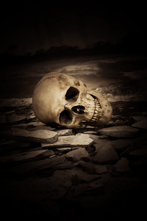 exorcist: Human skull on ruins place,Horror Background For Halloween Concept And Movie Poster Project Stock Photo