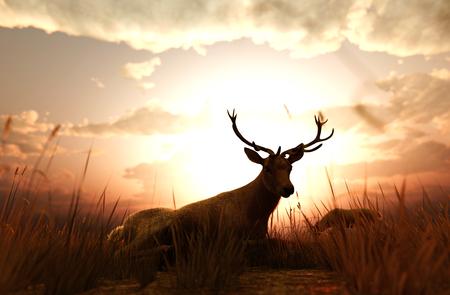 Deer in grass field at sunset or sunrise,3d illustration Imagens