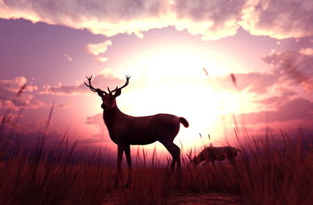 Deer in grass field at sunset or sunrise,3d illustration Stock Photo