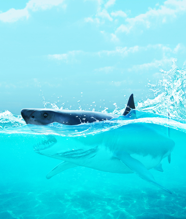 Shark under water,3d illustration Banco de Imagens